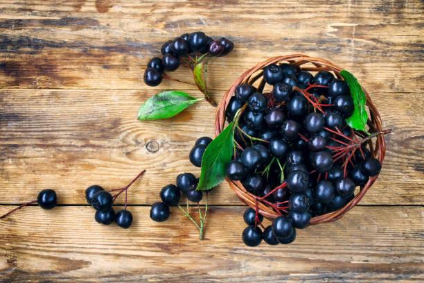 Baie d'Aronia – Plante, bienfaits et consommation d'un fruit aux mille vertus