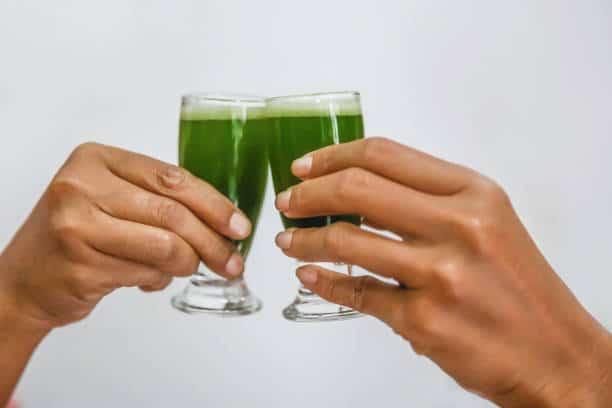 consommation spiruline composition santé