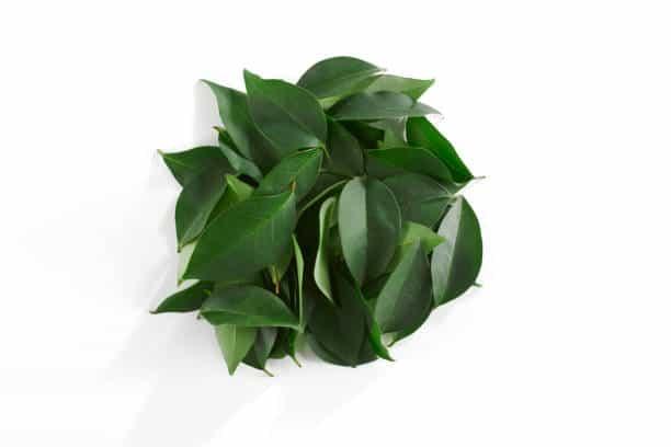 thé vert astuce minceur bruleur graisse naturel