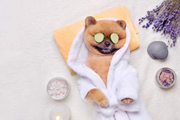 huile de coco chien soin naturel poils