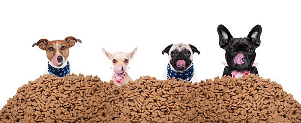 huile de coco croquettes pour chien soin naturel