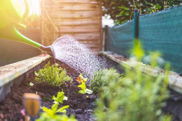 Arrosage potager : Tout savoir sur le besoin en eau de chaque plante