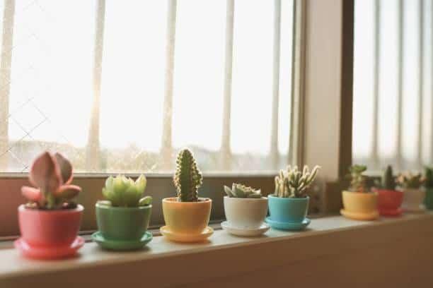 astuce entretien. plante grasse succulente
