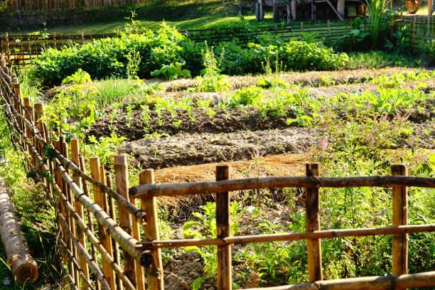 débuter potager permaculture jardin bio et sain