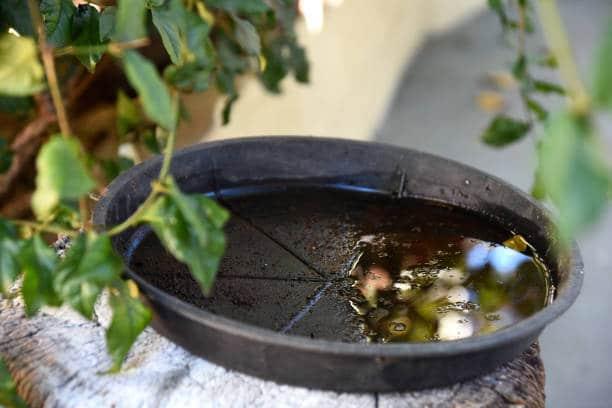 eau stagnante moustiques jardin infesté