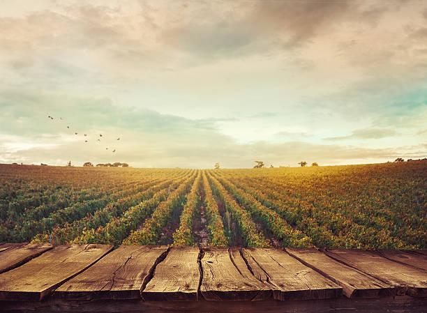 Il faut cultiver son jardin – La douce philosophie de Voltaire