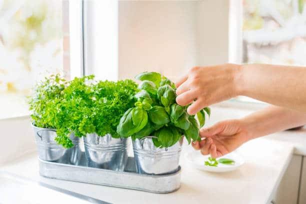 Jardin aromatique : Créez un petit coin d'herbes savoureuses à portée de main