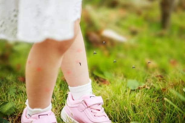 Jardin infesté de moustiques : Comment s'en débarrasser ? 8 remèdes efficaces
