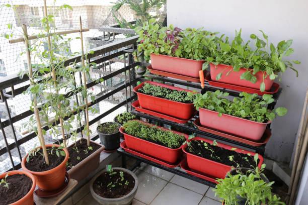 jardin vertical balcon terrasse urbain