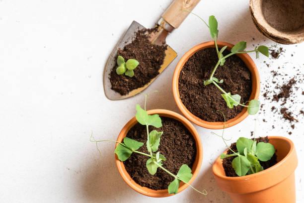 outils indispensables potager vertical jardin balcon