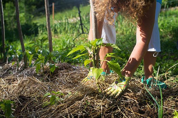 Paillage potager : Comment le réaliser pour garder un jardin en bonne santé ?
