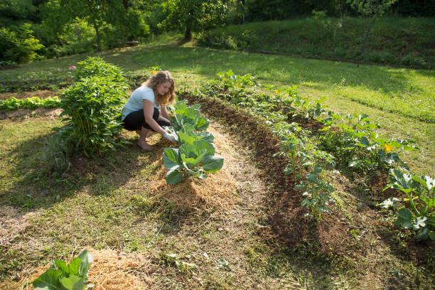 permaculture potager hors sol type de jardin écologique