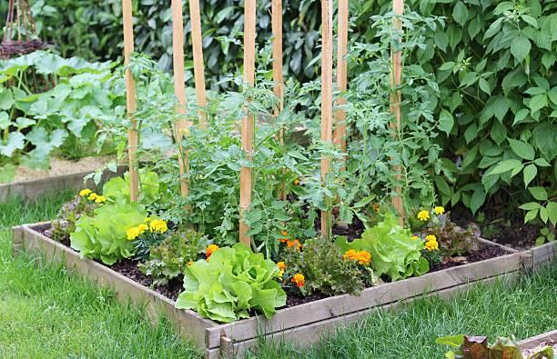 plan potager carré jardin organisation