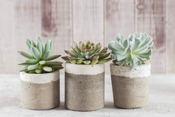 plante grasse liste succulente extérieur intérieur