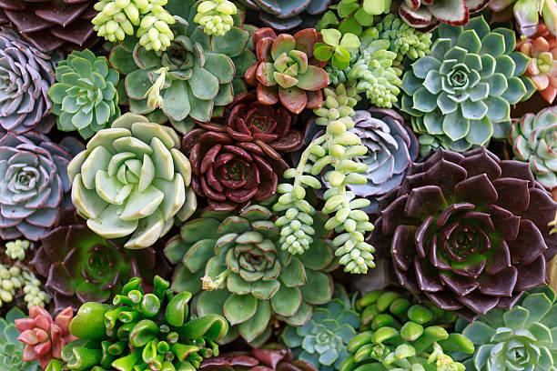 Plante grasse liste – Les succulentes qui se plaisent à l'extérieur et à l'extérieur