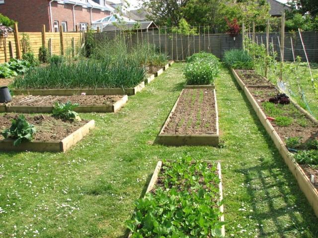 potager hors sol type de jardin