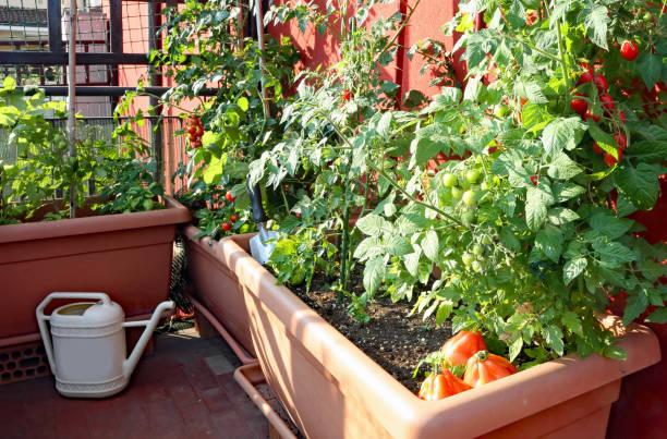 Potager vertical : Un jardin comestible sur votre terrasse – Guide pratique