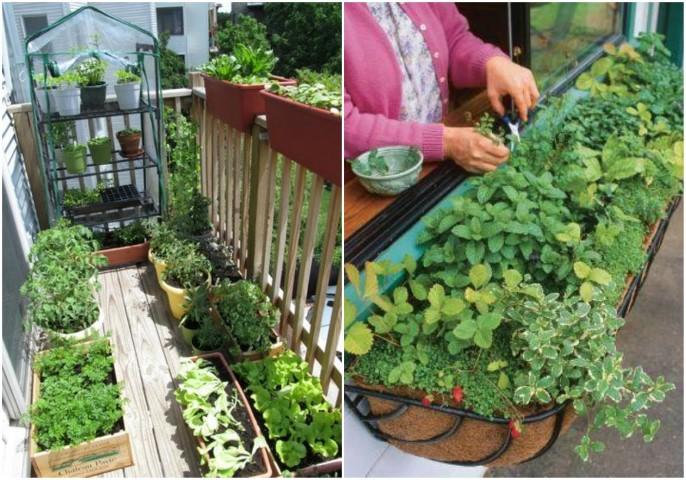 potager vertical type de jardin hors sol
