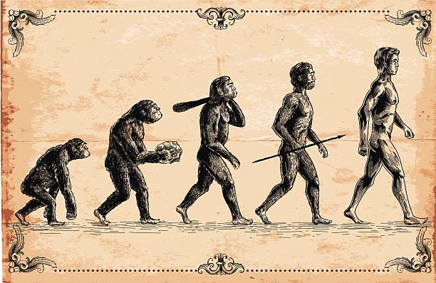 psychologie du développement homme singe