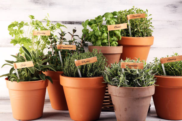 soleil jardin aromatiques plantes herbacées parfumées