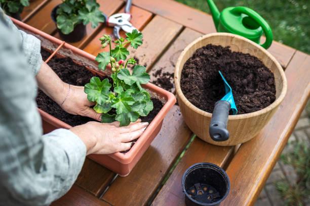 terre jardiniere jardin potager vertical