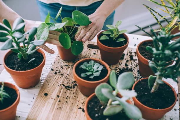Plante grasse entretien : Comment prendre soin facilement de ses succulentes ?