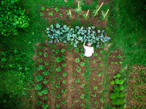 Comment choisir son type de jardin ? Potager hors sol, suspendu ou vertical ?