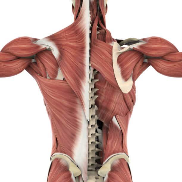 yin yoga fondements sur le fascia corps