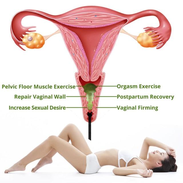 oeuf de yoni schema introduction vagin femme