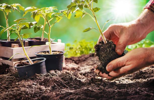 hiverner les plants de fruits et de legumes