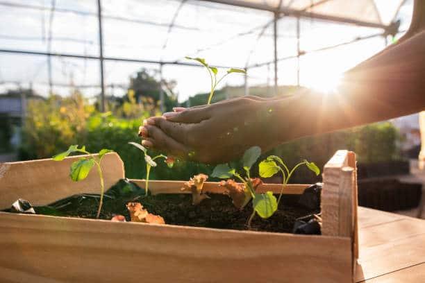 Préparer son jardin et son potager pour les protéger de l'hiver